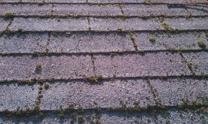 Moss lifting the roof shingles in pg co md. needs a wash